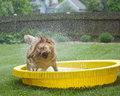 Dog Shaking Out Water Stock Image - 9338761