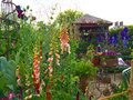 A Garden At The Chelsea Flower Show Royalty Free Stock Photos - 93360358