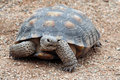 Tortoise Royalty Free Stock Image - 9340316