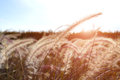 Grass Flower Or Meadow In The Field. Royalty Free Stock Image - 93423576