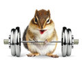 Funny Fitness Animal Chipmunk With Dumbbell On White Stock Image - 93435891