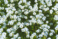 White Small Flowers Stock Photos - 93473363