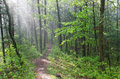 Misty Forest Trail At Castle Mound Stock Photos - 93506873