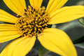 Yellow Flower Stamen Close Up Stock Images - 93520454