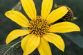 Yellow Flower Stamen Close Up Stock Photography - 93522112