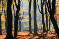 Silhouette Colors In Autumn Stock Photography - 93543302