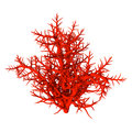 3D Rendering Red Coral On White Royalty Free Stock Photos - 93547328