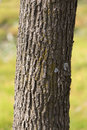 Trunk Of A Tree In A Park On The Nature Stock Photo - 93606570