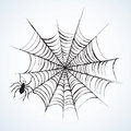 Spider. Vector Illustration Stock Photography - 93672702