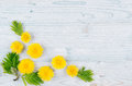 Spring Background. Yellow Dandelion Flowers And Green Leaves On Light Blue Wooden Board With Copy Space, Top View. Royalty Free Stock Photography - 93717677