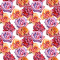 Wildflower Rose Flower Pattern In A Watercolor Style Isolated. Royalty Free Stock Photography - 93780117