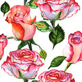 Wildflower Rose Flower Pattern In A Watercolor Style Isolated. Royalty Free Stock Image - 93780206