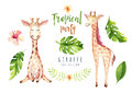 Hand Drawn Watercolor Tropical Plants Set And Giraffe. Exotic Palm Leaves, Jungle Tree, Brazil Tropic Botany Elements Stock Photos - 93786723