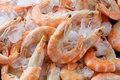 Frozen Prawns On Ice. Macro. Royalty Free Stock Images - 93858109