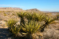 Yucca Tree In The Mountains, Joshua Tree National Park Stock Photos - 93897403