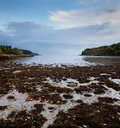 Low Tide Royalty Free Stock Photos - 9391938