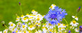 Wild Flower Bouquet . Royalty Free Stock Photography - 93962177