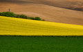 Multicolored Rural Landscape. A Green Field Of Wheat, A Strip Of Yellow Flowering Rape And Brown Plowed Arable Land.Wavy Cultivate Stock Images - 94005454