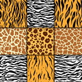 Seamless Pattern With Cheetah Skin. Vector Background. Colorful Zebra And Tiger, Leopard And Giraffe Exotic Animal Print Stock Images - 94006494