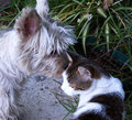Cat And Dog Royalty Free Stock Image - 94022686