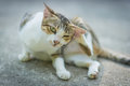 Portrait Of Cat Royalty Free Stock Images - 94062989