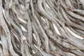 Close Up Of Dry Vine Royalty Free Stock Image - 94086156