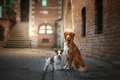 Two Dogs In Old Town Royalty Free Stock Images - 94093669