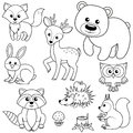 Forest Animals. Fox, Bear, Raccon, Hare, Deer, Owl, Hedgehog, Squirrel, Agaric And Tree Stump. Black And White Vector Illustration Royalty Free Stock Photography - 94141677
