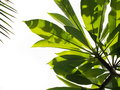 Green Leaves Royalty Free Stock Image - 94180436