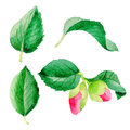 Wildflower Camellia Japanese Flower Leaf In A Watercolor Style Isolated. Royalty Free Stock Photo - 94220685