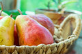 Ripe Colorful Red And Yellow Organic Pears In Wicker Basket On Garden Table By Window, Flowers In Pots, Green Background Stock Image - 94223851
