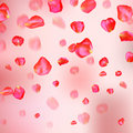 A Lot Of Falling Red Rose Petals On Pink Background. Royalty Free Stock Photo - 94224035