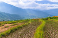 Close Up Image Of A Rice Field In Punakha, Bhutan. Royalty Free Stock Photos - 94227688