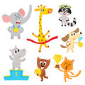 Cute Little Animal Characters, Champions, Winners Holding Medals, Cups Royalty Free Stock Image - 94237006