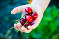 Cherries Stock Photography - 94251352