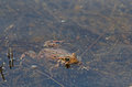 American Toad Stock Photo - 94268050