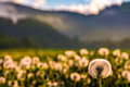 Dandelion At Foggy Sunrise In Mountains Royalty Free Stock Images - 94356469