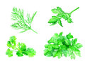 Vegetables Set Watercolor, Greens For Salad Royalty Free Stock Image - 94393436
