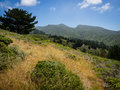 Coastal Chaparral With Montara Mountain In The Distance, Montara Stock Images - 94432024