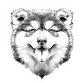 Dog Head Symmetry Sketch Vector Graphics Stock Photo - 94435320