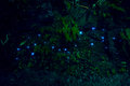 Amazing Waitomo Glow Worm In Caves, Located In New Zealand Royalty Free Stock Photos - 94479088