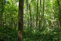 Trees In The Woods Stock Image - 94492341