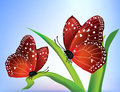 Vector Two Butterflies Royalty Free Stock Photo - 9453025