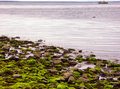 Low Tide At Silver Sands State Park In Milford Stock Photo - 94522870