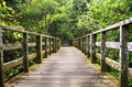 Wooden Timber Walking Path Into Jungle Of Sabah, Borneo Royalty Free Stock Image - 94537446