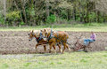Plowing A Field With Horses And An Old Plow Royalty Free Stock Photo - 94588565