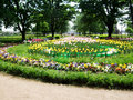 Colorful Tulips And Flowers  Grow In The Park Saint Peterburg Royalty Free Stock Photo - 94599145