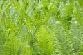Young Fern In The Forest Stock Photo - 94657850