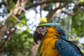 Colorful Blue Yellow Macaw Parrot Bird Stock Image - 94692951