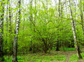 Nature Landscape View Of A Green Forest Jungle On Spring Season With Green Trees And Leaves. Peaceful Tranquil Outdoor Scenery Royalty Free Stock Photos - 94808028